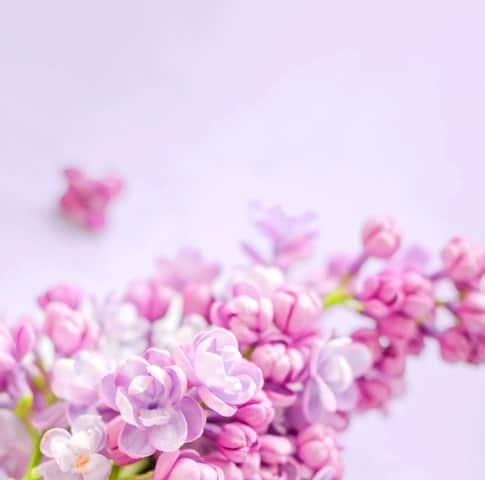 خرید گل برای مراسم - خرید اینترنتی گل